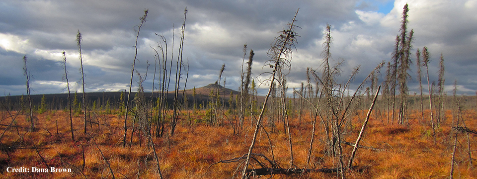 Landscape Effects of Wildfire on Permafrost Distribution in Interior Alaska Derived from Remote Sensing
