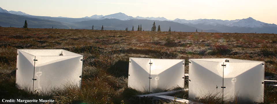 Experimental permafrost thaw stimulated Nitrogen availability and plant growth causing greater CO2 uptake and release